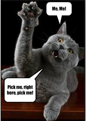 Me, Me! Pick me, right here, pick me!