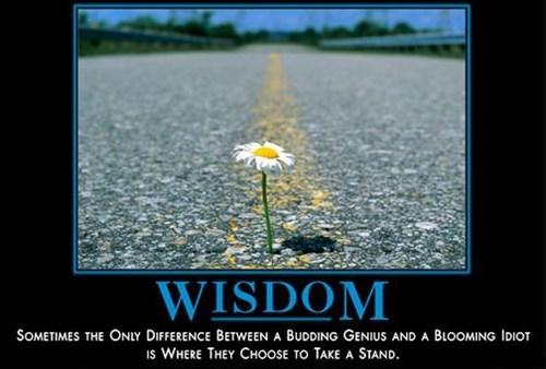 wisdom flowers idiots funny