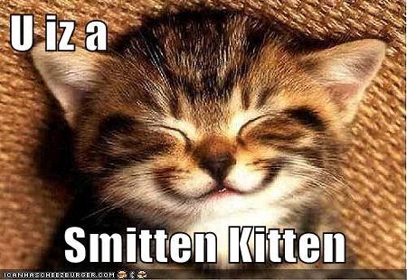 U Iz A Smitten Kitten Lolcats Lol Cat Memes Funny Cats