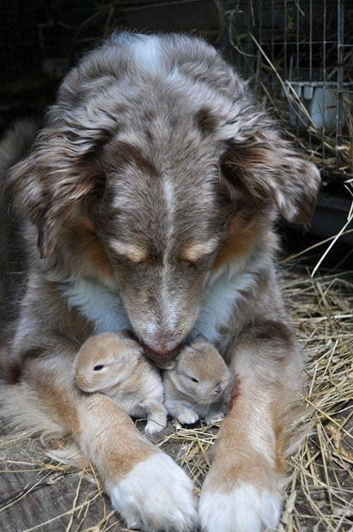 bunnies dogs protect - 8085304320