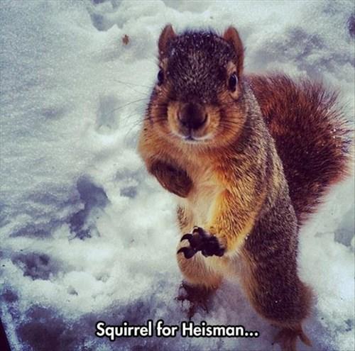 squirrel trophy football - 8085425152