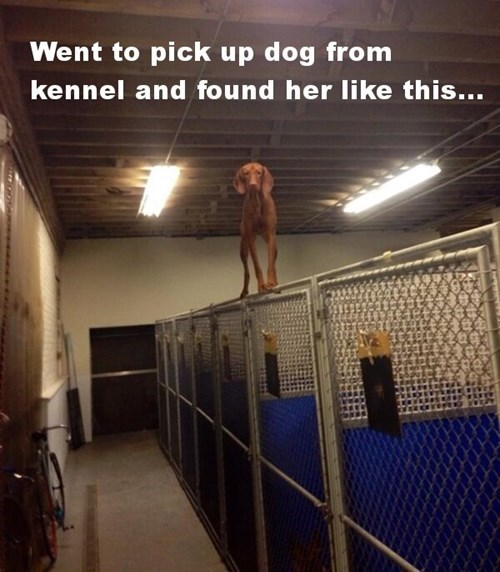 dogs,balance,kennel