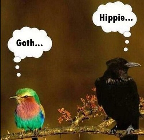 goth,birds,hippies
