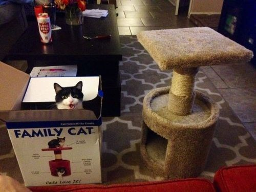 boxes Cats funny - 8085481728