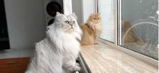 moving Cats Video - 8086533