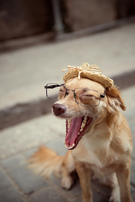 perros animales fotos - 8086624256