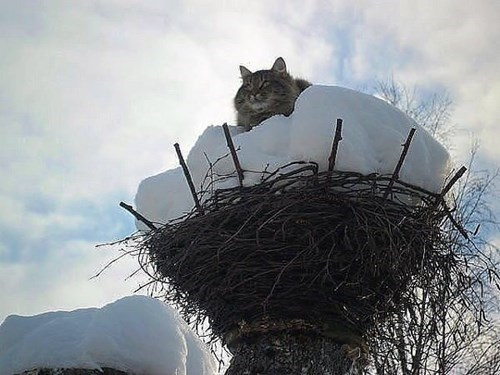 angry birds nests Cats funny - 8086681856