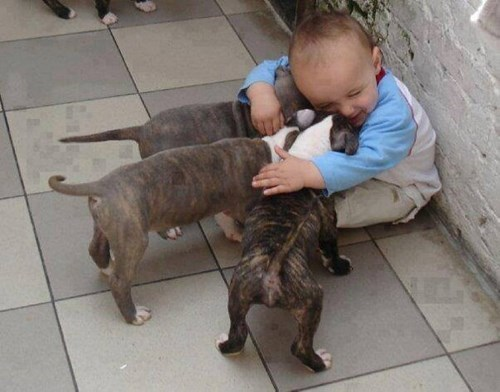 Babies snuggle puppies cute kissing - 8086682624