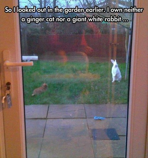 surprised back yard Cats interrupt rabbits - 8086731008