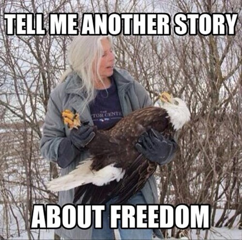 freedom eagles stories - 8086733056