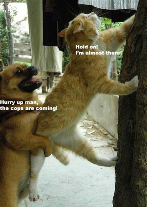 cops crime Cats - 8086815488
