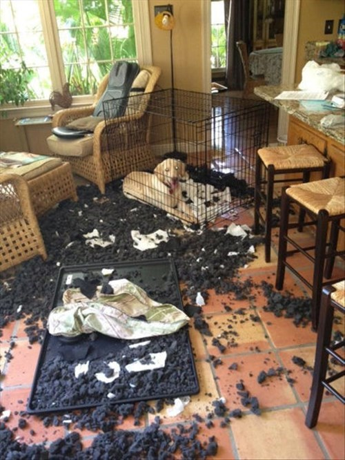 dogs,crate,innocent,destroy,mess,guilty