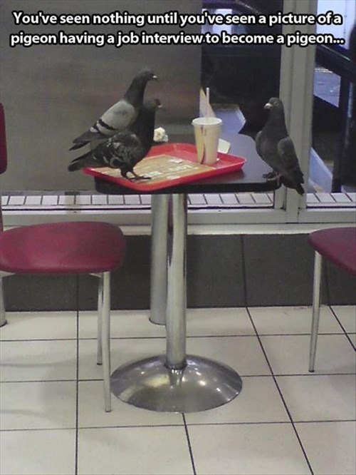 interview pigeons funny - 8086883584