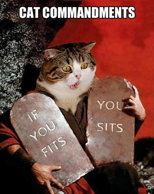 ten commandments moses Cats funny - 8086917888