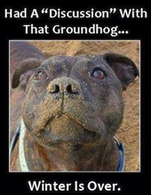 dogs spring groundhog day winter