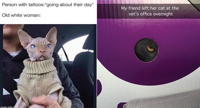 funny cat memes its-caturday funny memes funny cats Caturday Cats funny cat memes - 8087045