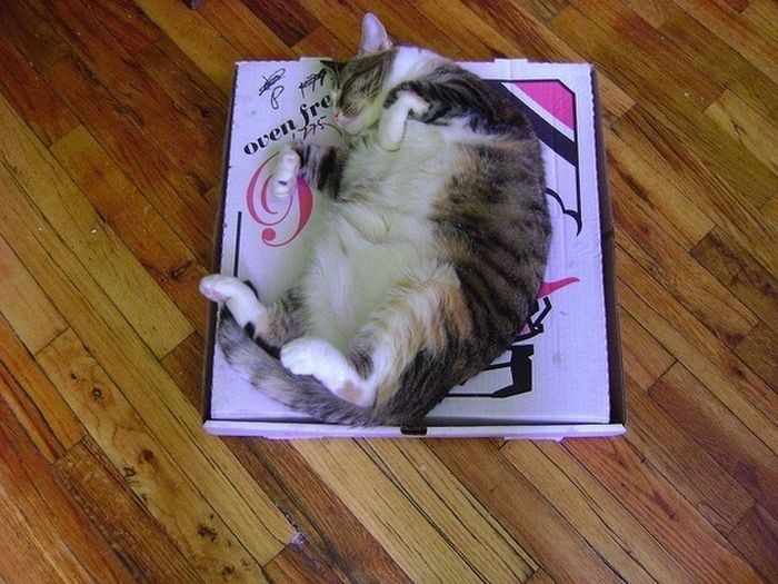 boxes,pizza,pizza box,Reddit,Cats