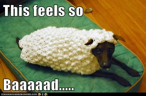 dogs sweaters sheep funny - 8087315200