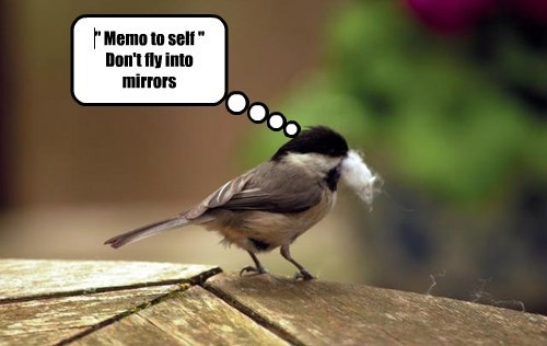 """ Memo to self "" Don't fly into mirrors"