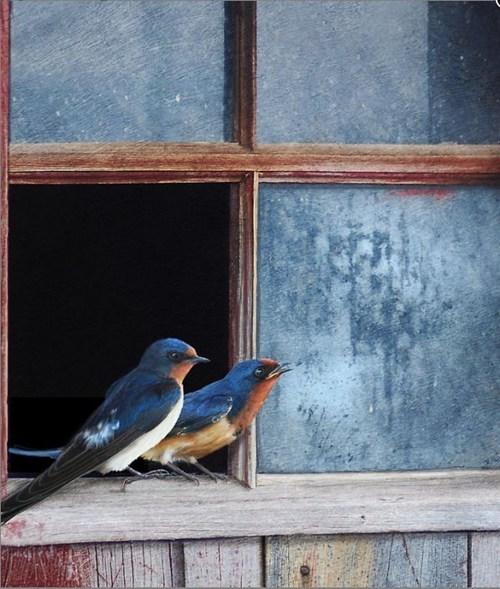 spring birds cute - 8087860736