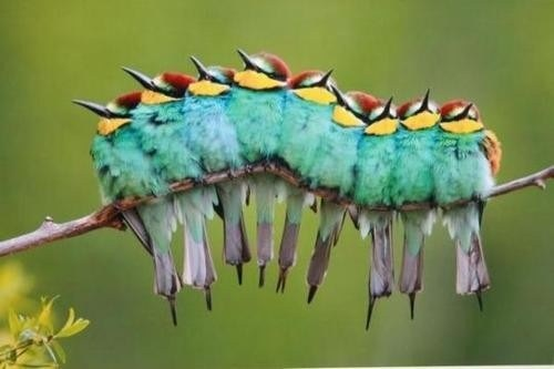 snuggle,birds,cute,disguised,caterpillar