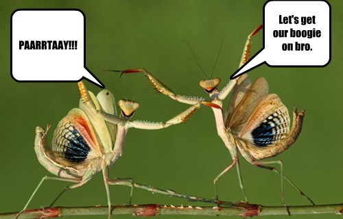 bugs,praying mantis,dance,funny