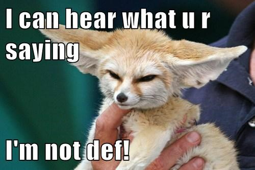 fennec fox ears cute hearing