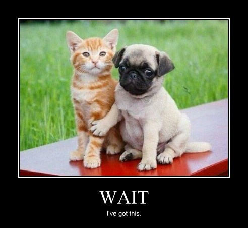 wait cat dogs funny animals - 8088887296