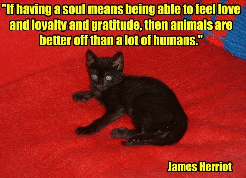 """If having a soul means being able to feel love and loyalty and gratitude, then animals are better off than a lot of humans."" James Herriot"
