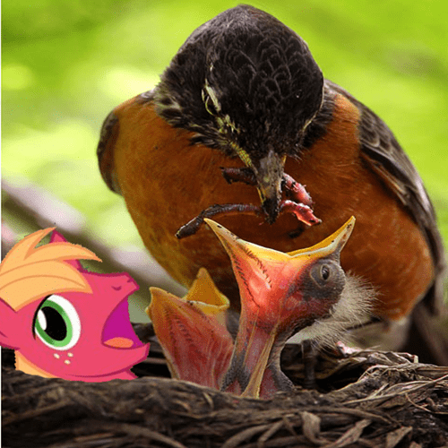 Babies birds Big Macintosh - 8089350400