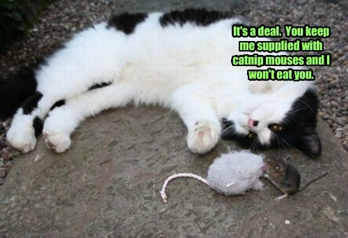 It's a deal.  You keep me supplied with catnip mouses and I won't eat you.
