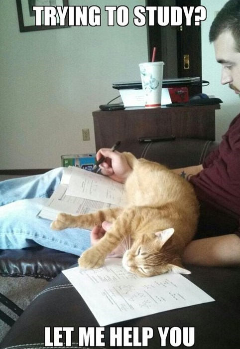 studying,cute,Cats