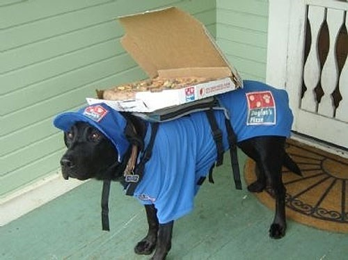 dogs pizza delivery - 8089799424
