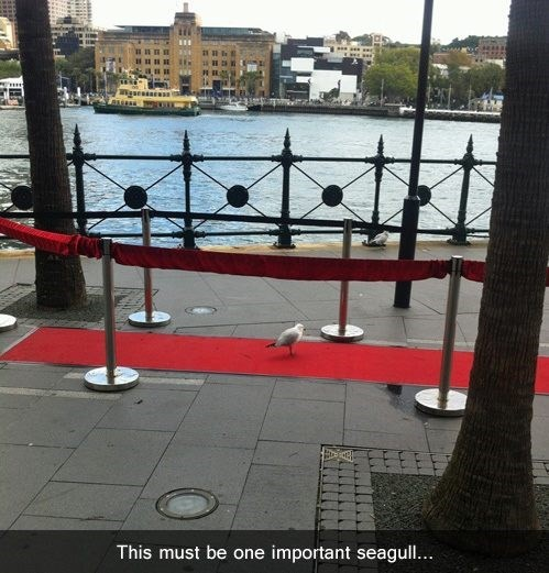 red carpet captain phillips seagull oscars - 8089821952