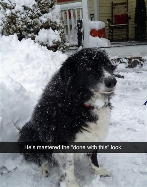 dogs snow winter funny