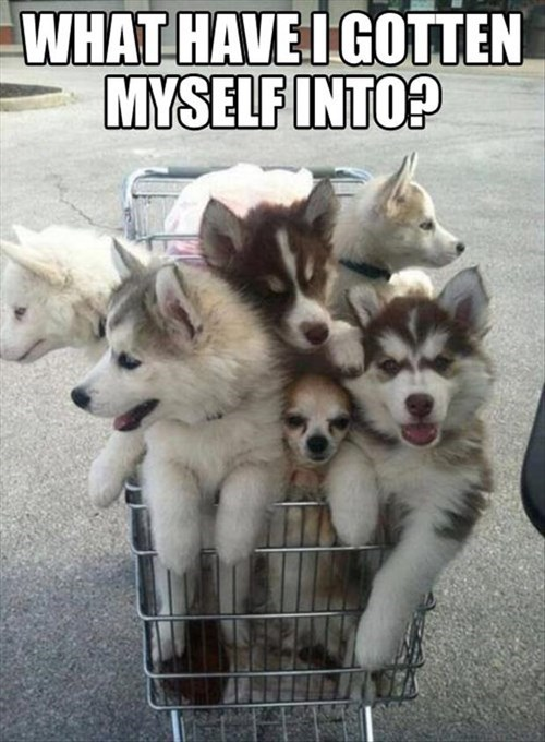dogs annoying puppies grocery store