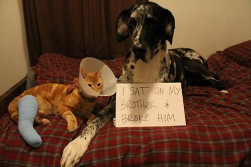 dogs injury dog shaming Cats - 8089868800