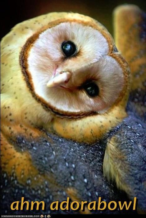 birds cute owls - 8090578432