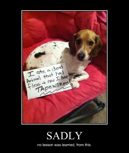 sign dogs poop funny - 8090647296
