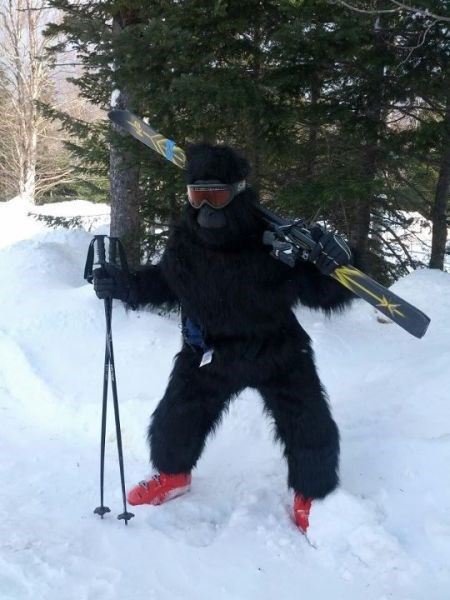 poorly dressed skiing gorilla - 8090825216