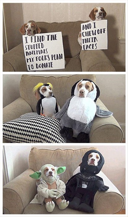 dogs crime funny - 8090826496