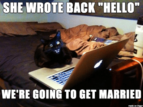 marriage online dating Cats funny - 8090852864
