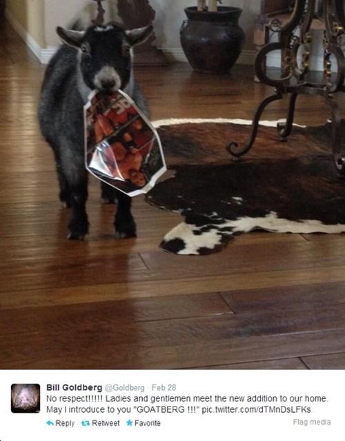 twitter goat wwe pets puns failbook g rated - 8090860288
