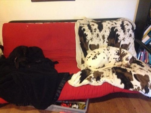 dogs,camouflage,sleeping,funny
