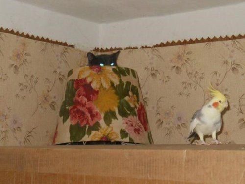 birds SOON creepy sneakers Cats hiding - 8090924032