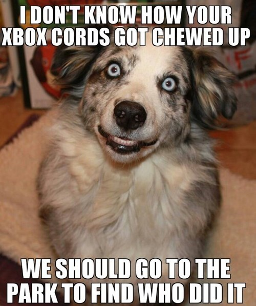 dogs park xbox solution - 8090960640