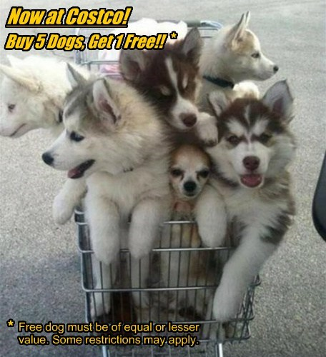 Now at Costco! Buy 5 Dogs, Get 1 Free!! * * Free dog must be of equal or lesser value. Some restrictions may apply.