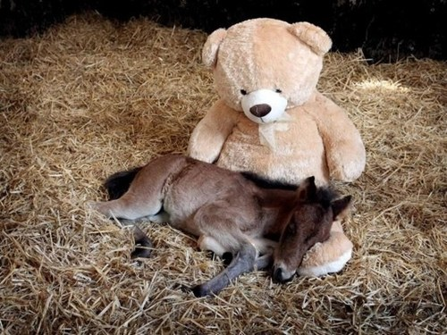 Babies,teddy bear,cute,horses