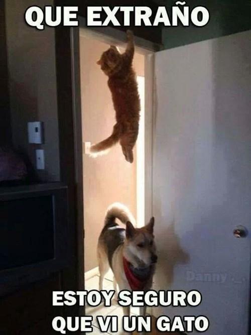 gatos perros animales - 8091852288