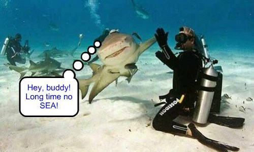 friends,puns,sharks,scuba diving